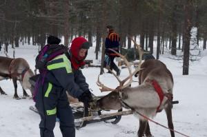 Anita Reindeer Safari
