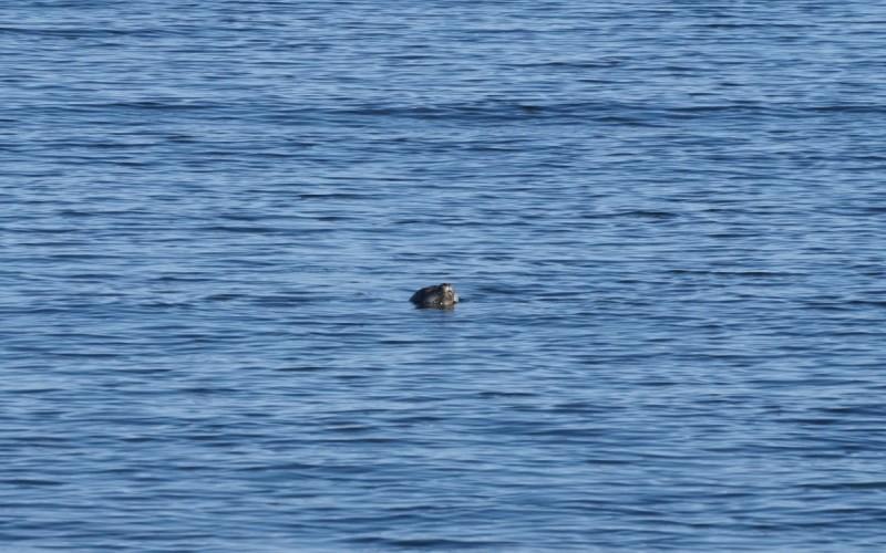 Seal-spotting