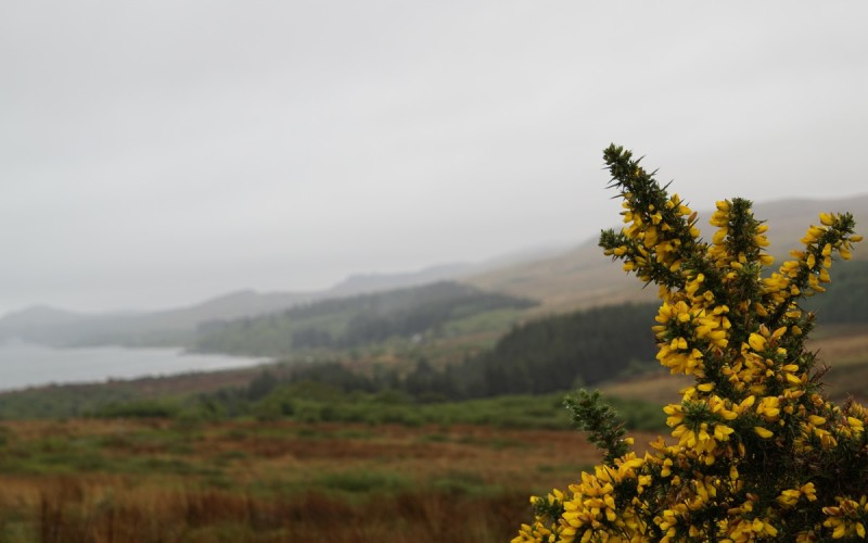 This yellow flower on thorny bristles coloured the landscape